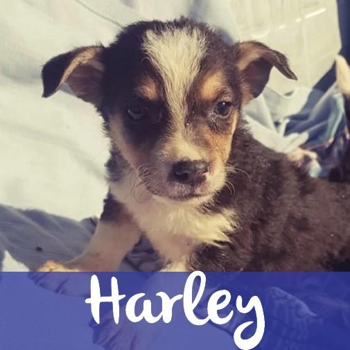 HarleyM