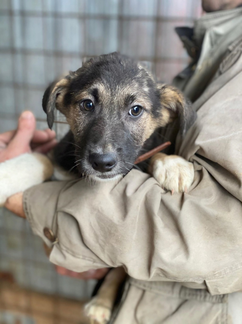 Harry-mâle- fourrière de Târgu Frumos - adopté via Andreea Harry_10
