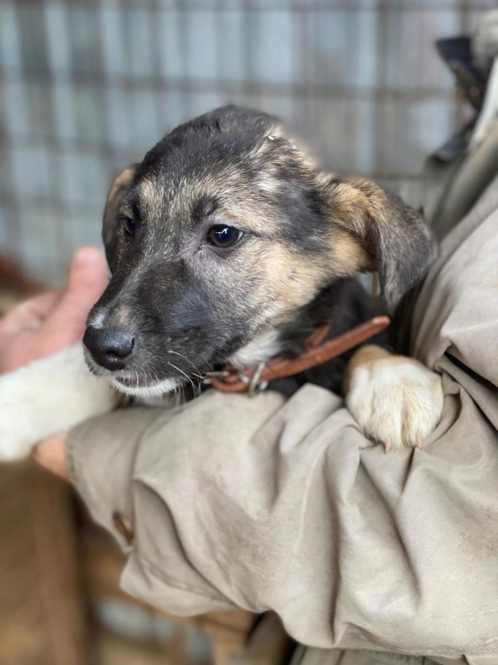 Harry-mâle- fourrière de Târgu Frumos - adopté via Andreea Harry_11