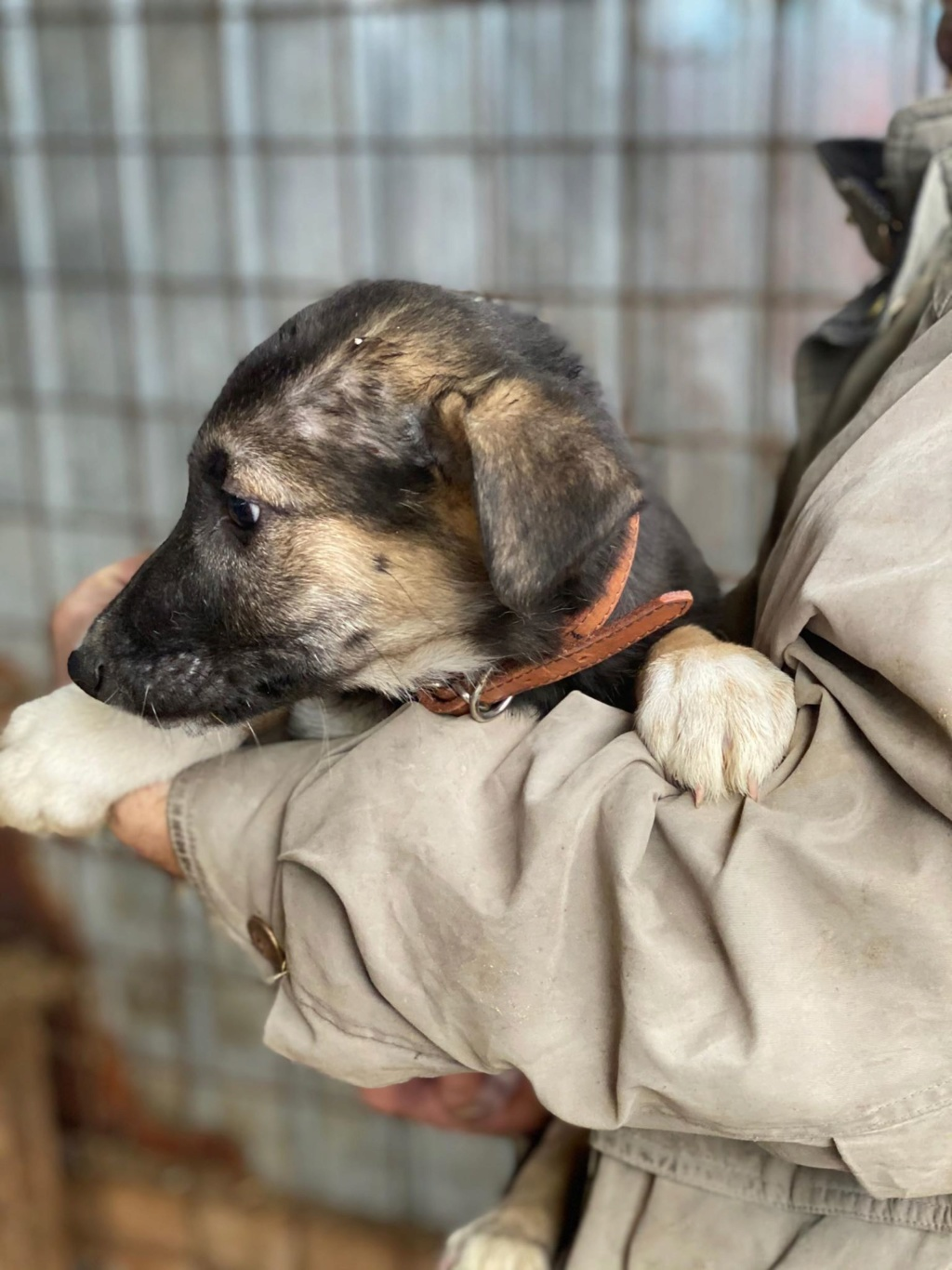 Harry-mâle- fourrière de Târgu Frumos - adopté via Andreea Harry_13