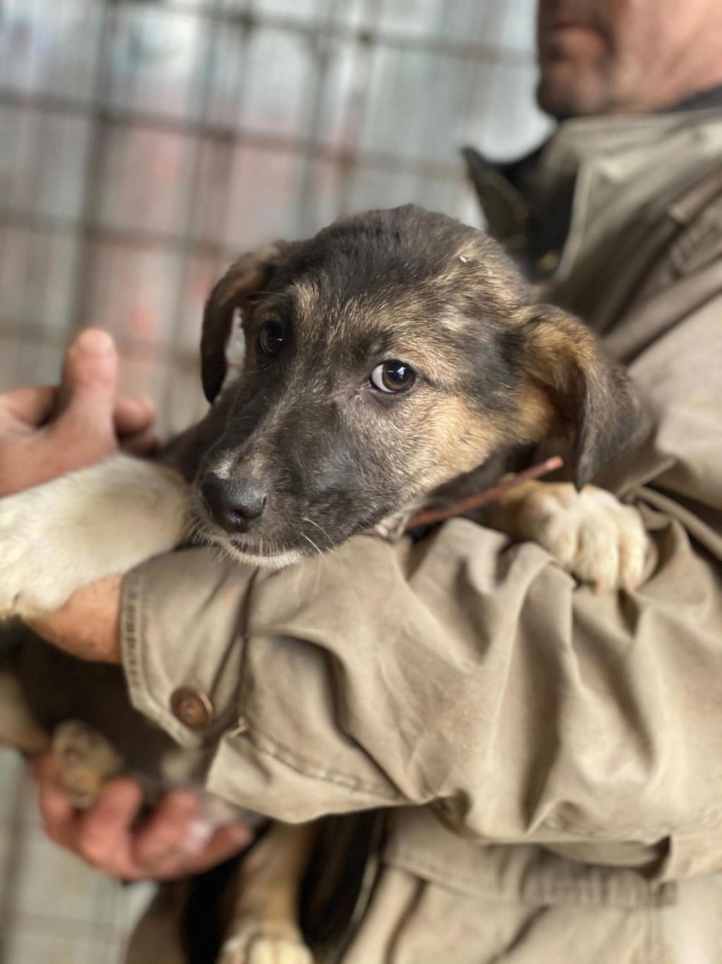 Harry-mâle- fourrière de Târgu Frumos - adopté via Andreea Harry_15
