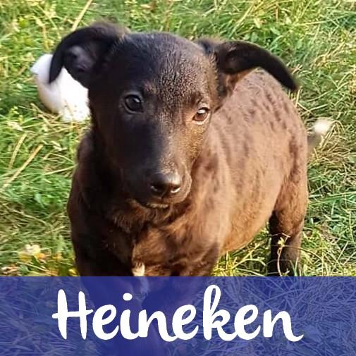 HeinekenM