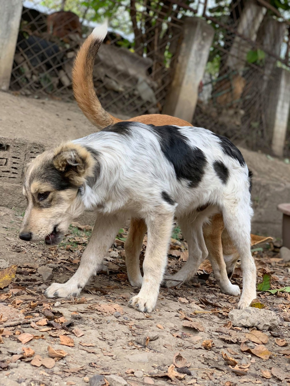 Hélios-mâle- fourrière de Târgu Frumos - adopté via Andreea Hel10