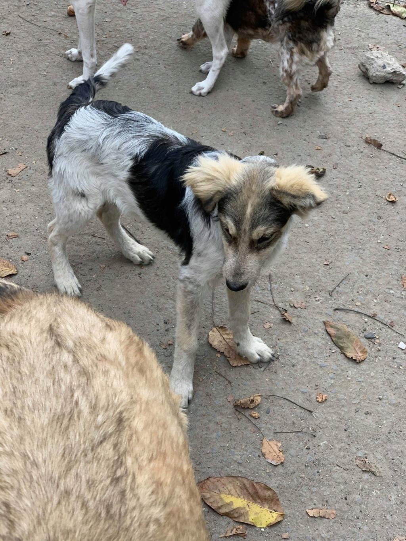 Hélios-mâle- fourrière de Târgu Frumos - adopté via Andreea Helioo10