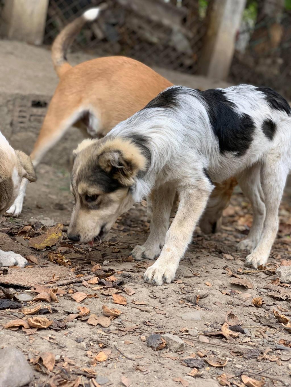 Hélios-mâle- fourrière de Târgu Frumos - adopté via Andreea Helioo12