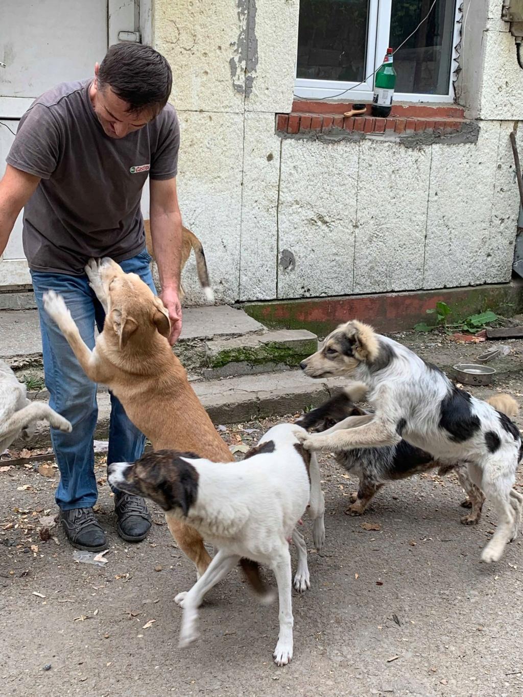 Hélios-mâle- fourrière de Târgu Frumos - adopté via Andreea Helioo13