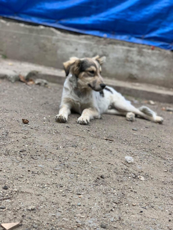 Hélios-mâle- fourrière de Târgu Frumos - adopté via Andreea Helioo14