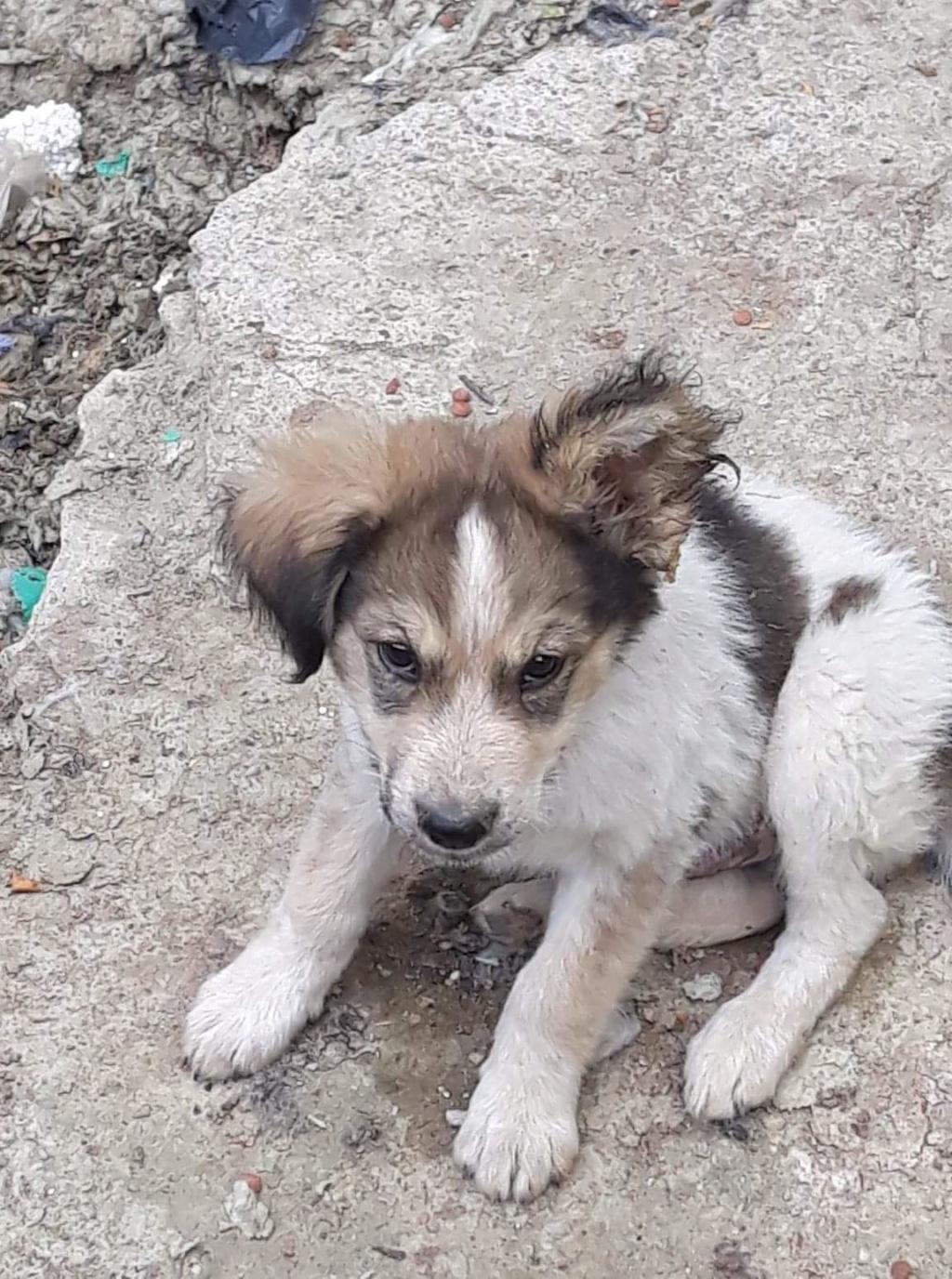 Hélios-mâle- fourrière de Târgu Frumos - adopté via Andreea Helios27