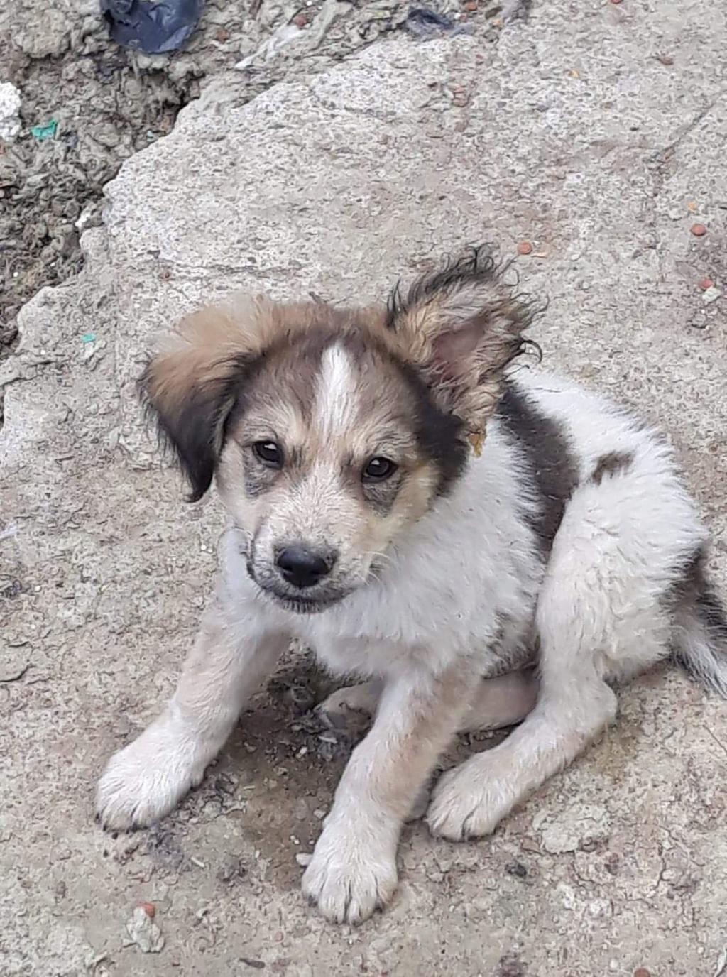 Hélios-mâle- fourrière de Târgu Frumos - adopté via Andreea Helios28