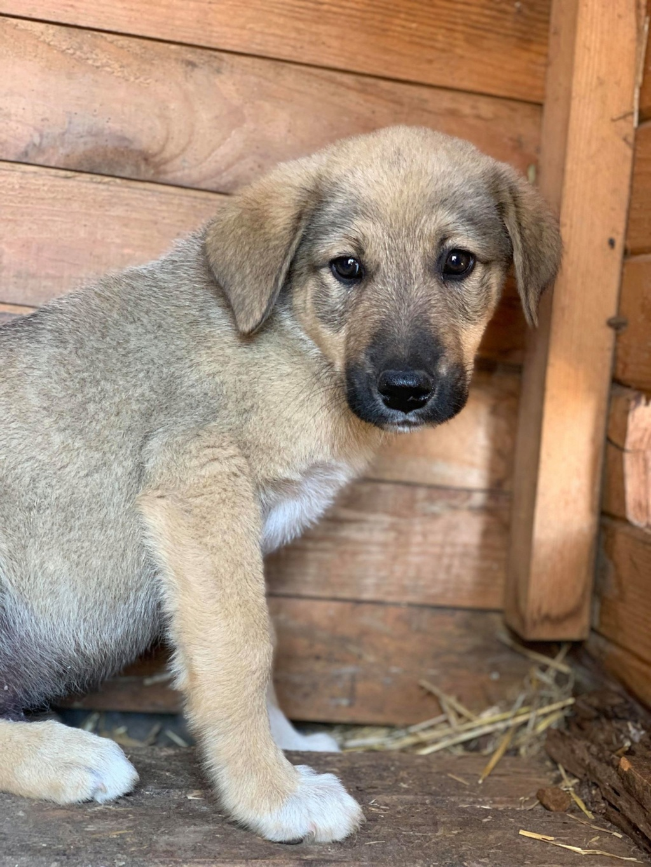 Hérion-mâle- refuge de Târgu Frumos réservé adoption (67) Henna_16