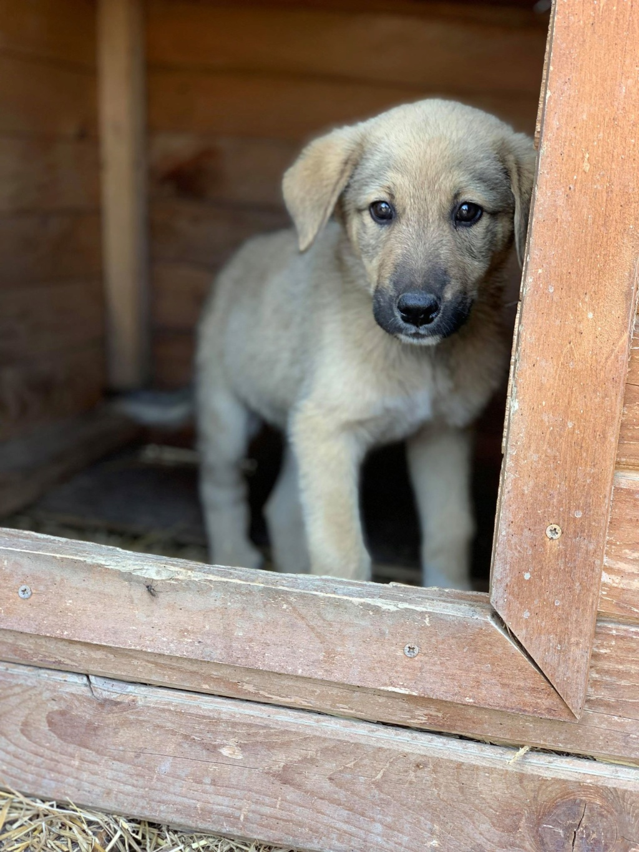 Hérion-mâle- refuge de Târgu Frumos réservé adoption (67) Henna_19