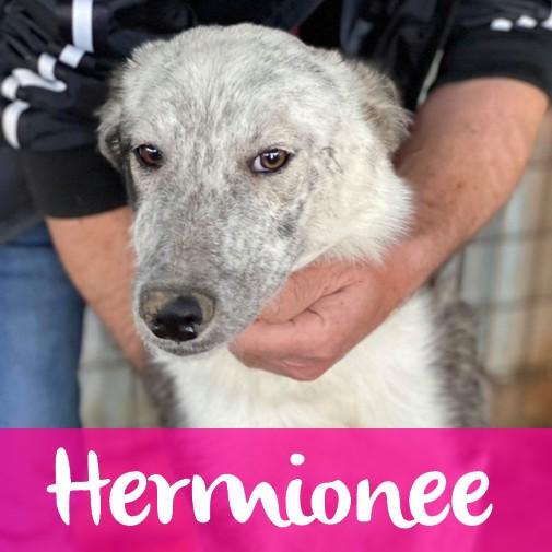 HermioneeF