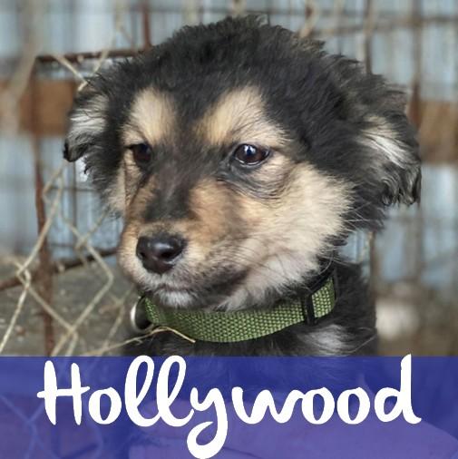 HollywoodM