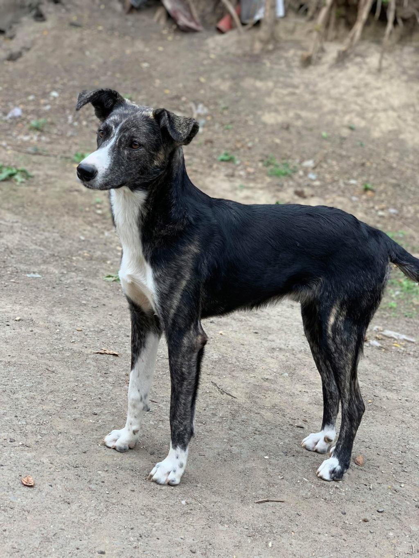 Humphrey - mâle - fourrière de Târgu Frumos - adopté via Andreea Humpp10