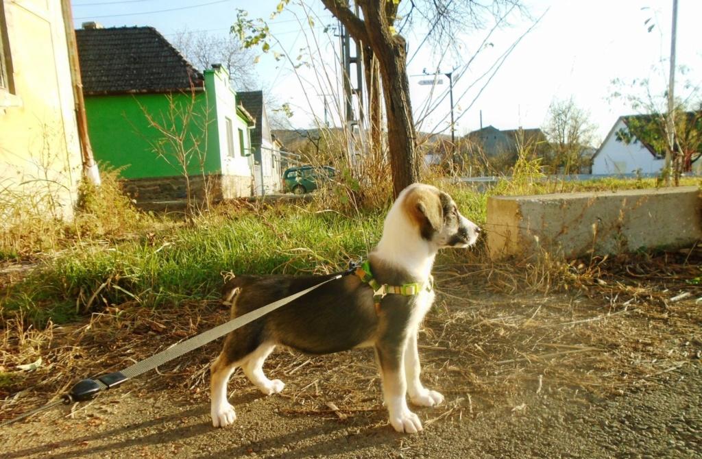 Genna (ex Starsky) -mâle- refuge d'Arad - Réservé adoption (67) Hutch_16