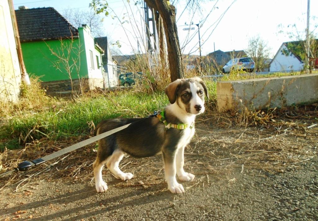 Genna (ex Starsky) -mâle- refuge d'Arad - Réservé adoption (67) Hutch_21