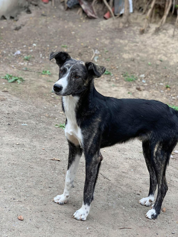 Humphrey - mâle - fourrière de Târgu Frumos - adopté via Andreea Huuh10