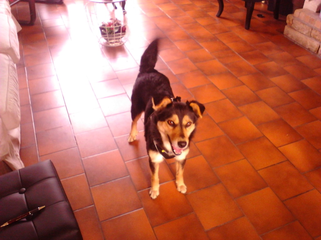 Nashka (ex-Nikita) - femelle - fourrière de Târgu Frumos - réservée adoption (80) Img_2020