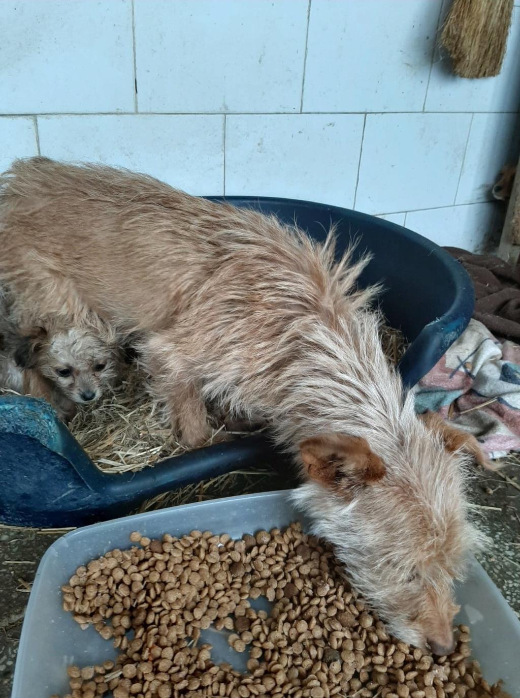 Zumia- femelle- fourrière de Târgu Frumos - réservée adoption (88) Inca_119