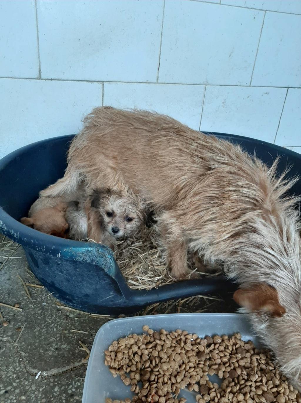 Zumia- femelle- fourrière de Târgu Frumos - réservée adoption (88) Inca_120