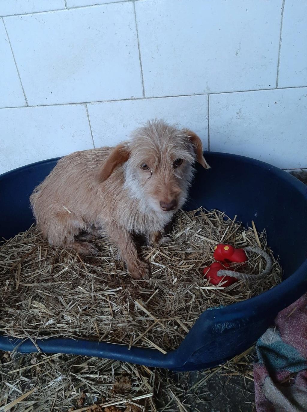 Zumia- femelle- fourrière de Târgu Frumos - réservée adoption (88) Inca_214