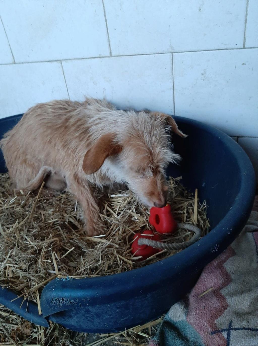 Zumia- femelle- fourrière de Târgu Frumos - réservée adoption (88) Inca_310