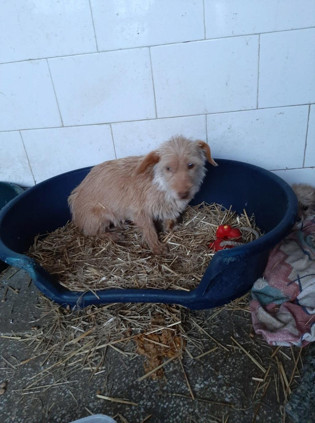 Zumia- femelle- fourrière de Târgu Frumos - réservée adoption (88) Inca_410