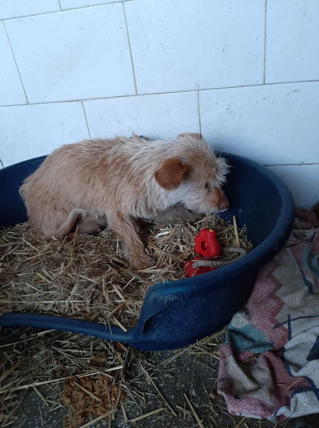 Zumia- femelle- fourrière de Târgu Frumos - réservée adoption (88) Inca_510