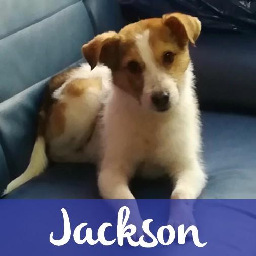 JacksonM