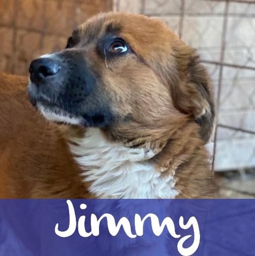JimmyM