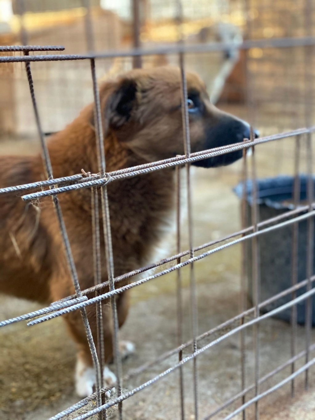 Jimmy- mâle- fourrière de Târgu Frumos  Jimmy_10