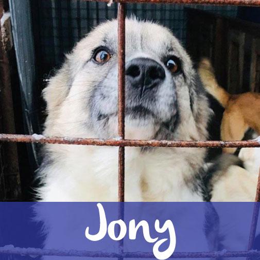 JonyM