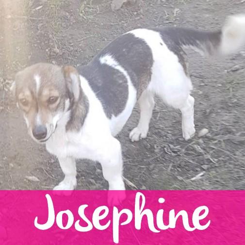 JosephineF