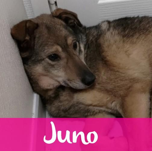 JunoF