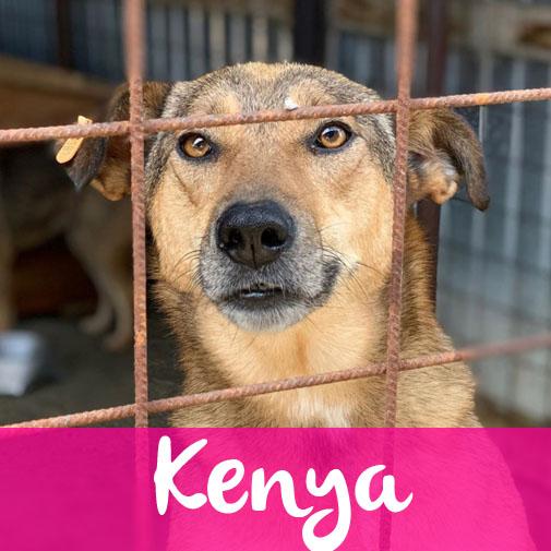 KenyaF