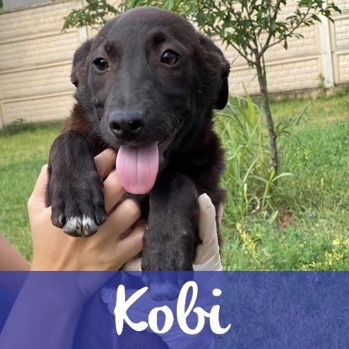 KobiM