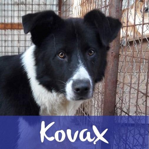 KovaxM