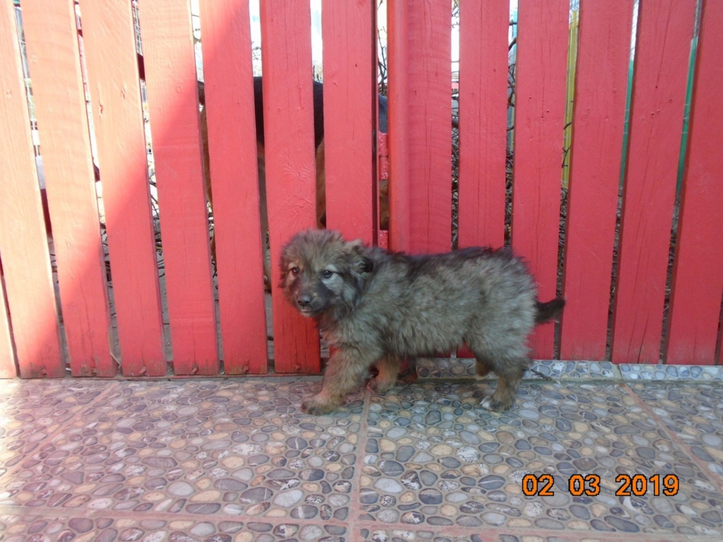 Lalena- femelle- refuge d'Arad - adoptée par sa FA Lalena16