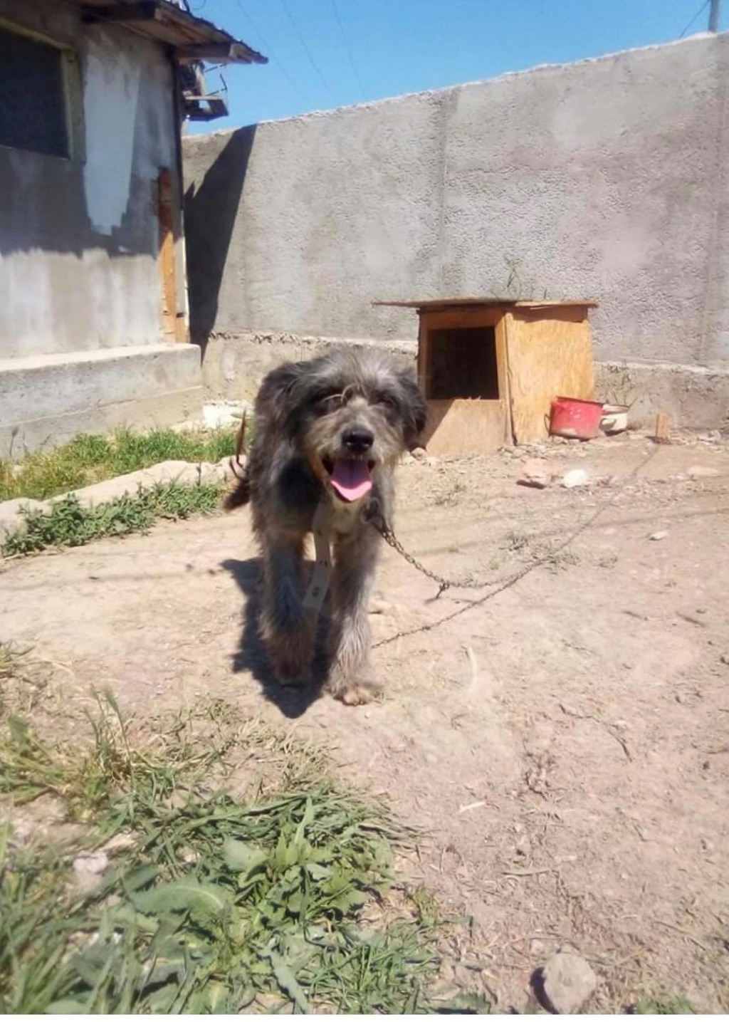 Leila- femelle- fourrière de Târgu Frumos - adopté via Andreea Leila_10