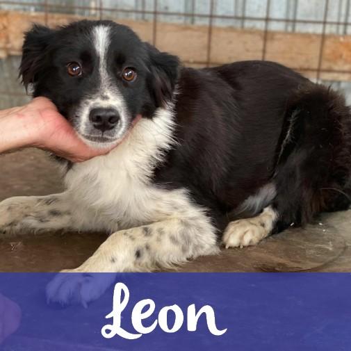 LeonM