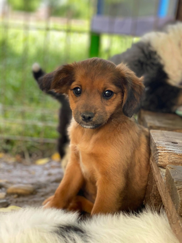 Litchi-femelle- fourrière de Târgu Frumos - réservée adoption (02) Litchi10