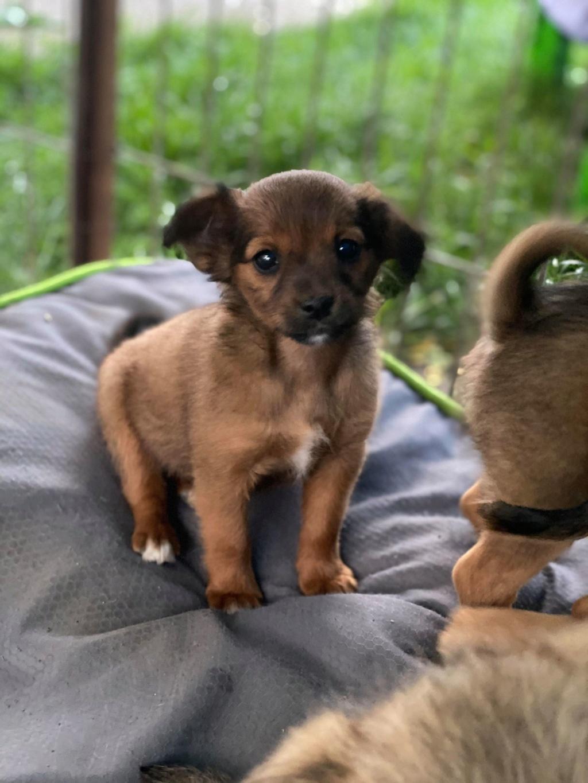 Litchi-femelle- fourrière de Târgu Frumos - réservée adoption (02) Litchi11