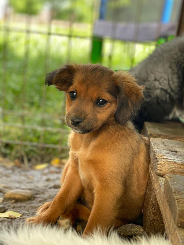 Litchi-femelle- fourrière de Târgu Frumos - réservée adoption (02) Litchi12