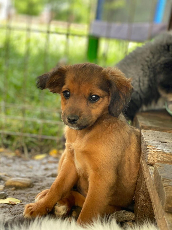 Litchi-femelle- fourrière de Târgu Frumos - réservée adoption (02) Litchi13