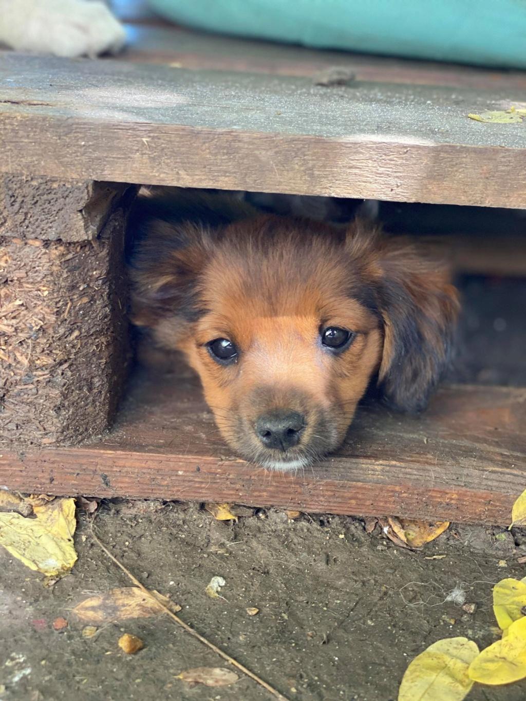 Litchi-femelle- fourrière de Târgu Frumos - réservée adoption (02) Litchi15
