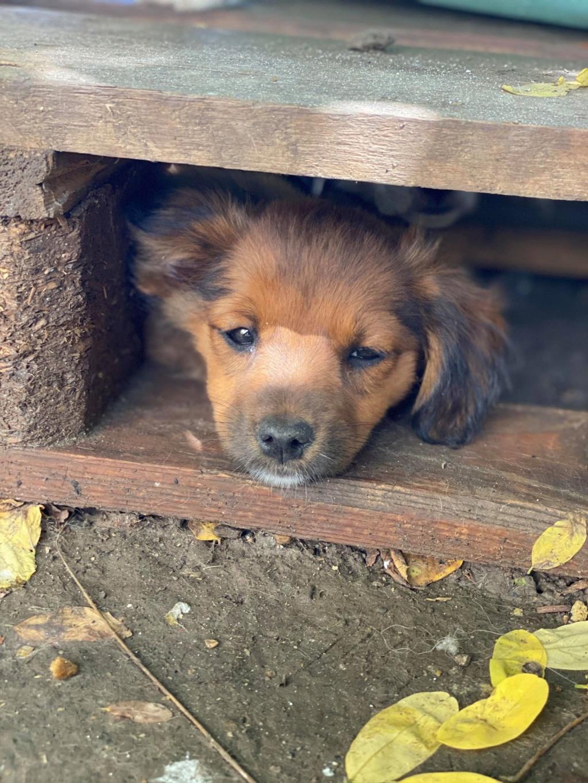 Litchi-femelle- fourrière de Târgu Frumos - réservée adoption (02) Litchi16