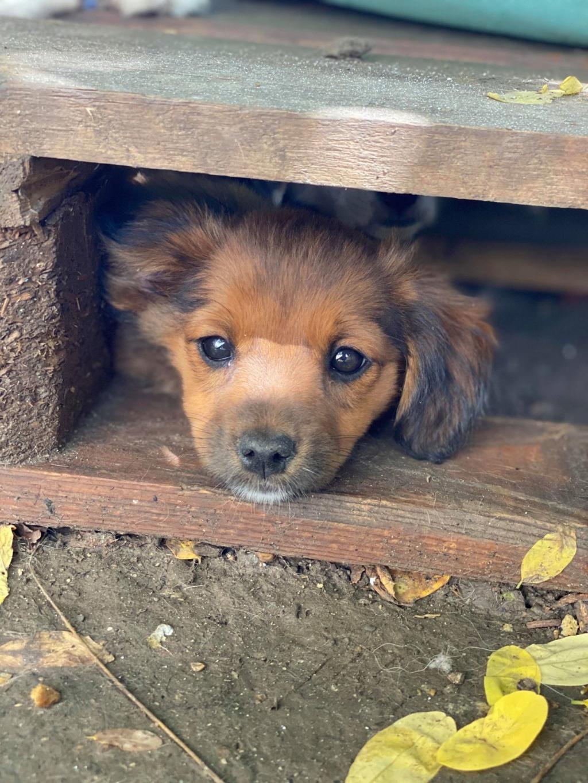 Litchi-femelle- fourrière de Târgu Frumos - réservée adoption (02) Litchi17