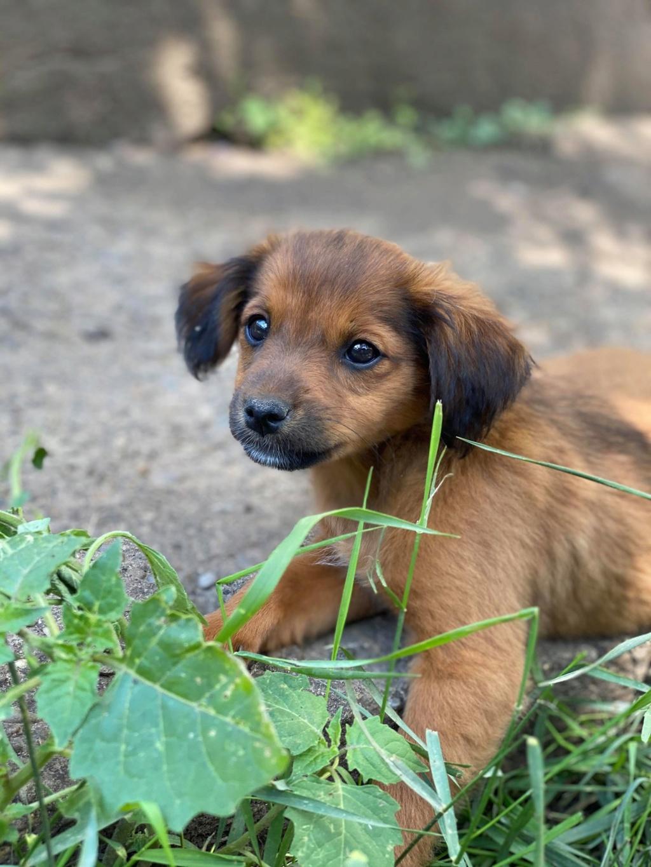 Litchi-femelle- fourrière de Târgu Frumos - réservée adoption (02) Litchi18