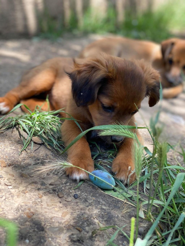 Litchi-femelle- fourrière de Târgu Frumos - réservée adoption (02) Litchi19