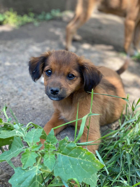 Litchi-femelle- fourrière de Târgu Frumos - réservée adoption (02) Litchi20